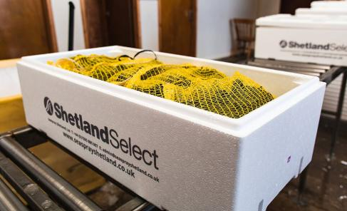 The best MSC certified Shetland rope grown mussels are back on the menu.